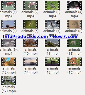 Captura-AnimalsStockVids1-V2_mrr-infoproductos.com-now7.com
