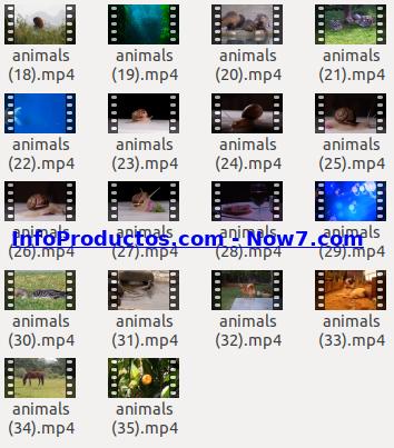 Captura-AnimalsStockVids2-V2_mrr-infoproductos.com-now7.com