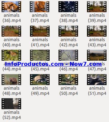 Captura-AnimalsStockVids3-V2_mrr-infoproductos.com-now7.com