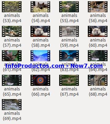 Captura-AnimalsStockVids4-V2_mrr-infoproductos.com-now7.com