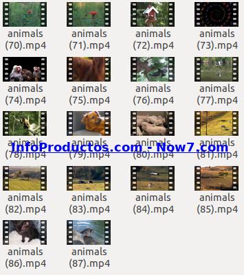 Captura-AnimalsStockVids5-V2_mrr-infoproductos.com-now7.com
