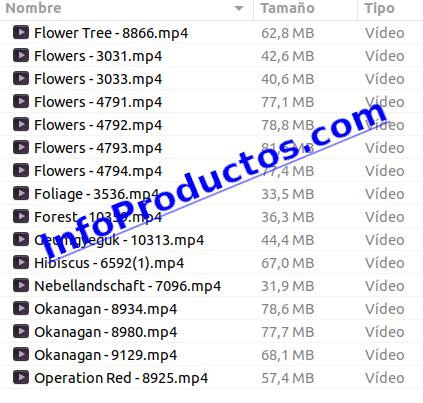 Foliage4kStockVideoFootage-pt1-elemntos-InfoProductos.com