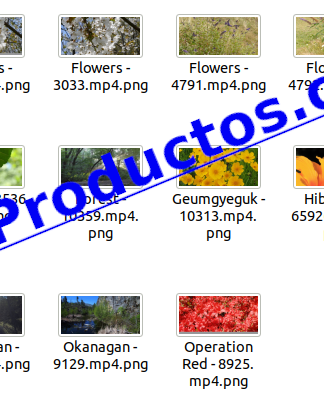 Foliage4kStockVideoFootage-pt1-videos-InfoProductos.com