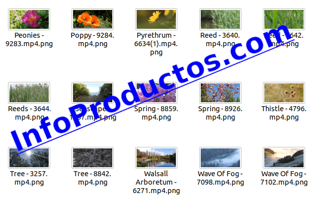Foliage4kStockVideoFootage-pt2-videos-InfoProductos.com