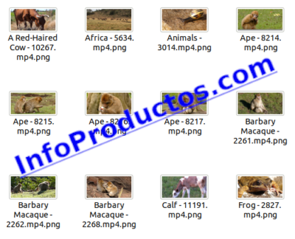 Animals4KStockVideoFootage-2-videos-InfoProductos.com