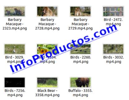 Animals4KStockVideoFootage-pt1-videos-InfoProductos.com