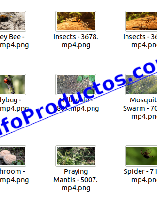 Insect4kStockVideoFootage-pt2-videos-InfoProductos.com