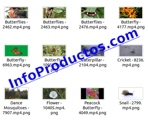 Insect4kStockVideoFootage-pt3-videos-InfoProductos.com